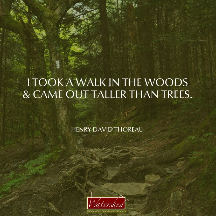 """I took a walk in the woods and came out taller than trees."" – Henry David Thoreau"