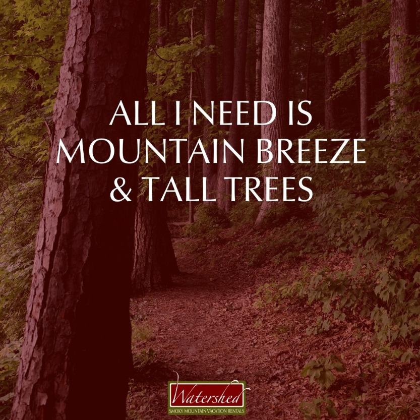 All I need is mountain breeze and tall trees.